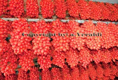 Neapolitan tomato bunch