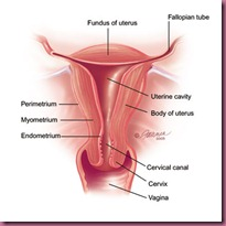 anatomy_Vagina