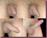 Process_of_penile_erection