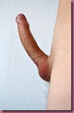 Big Erect Penis